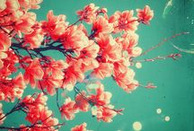 ♥ Flowers and Plants ☆ / Immagini trovate sul web - tutti i diritti riconosciuti agli autori  Images found on the internet and shared here in accordance with the copyright.