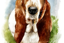 Meandro Basset Hounds