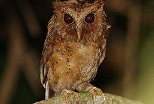Owls / by Cheryl Miller Paulson