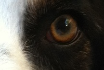 Eyes / by Pam's Dog Academy