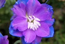 birthflowers / by Tyshea Bond
