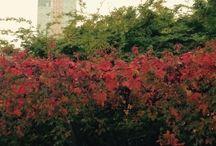Color / Colors que ens mostra la natura