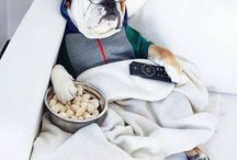 """Badbulldog / He's a high class dog, """"a good dog"""". He tells crass jokes in French, and has always been the spoiled child. Oblivious to worldly problems, he ignores everything and thinks he's the axis of the universe, born and raised in an upscale part of London. favorite phrase in French is, """"Salope""""."""