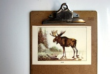 collection // my future moose room