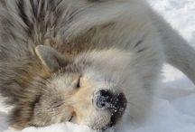 Wolf Love 🐾