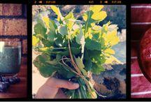 Raw food blogs