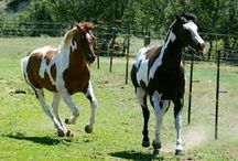 Horses & Ranch style home ideas / by Brooke Horvath