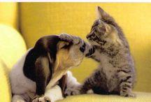 I love animals / by Cathy Addison