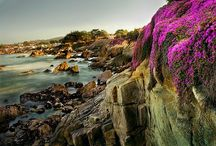 """Pacific Grove Photography / Welcome to Pacific Grove, California! Selected by the BBC as one of """"America's Best Little Beach Towns"""", called the """"Best Seaside Sanctuary"""" by VIA Magazine, named Life Magazine's """"Most Romantic City in the US"""", dubbed by Coastal Living """"A Dreamy California Destination"""", and selected as """"Best Wedding Location"""" according to the Monterey County Weekly. Enjoy this photographic tour of our coastal paradise."""