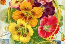 Vintage Prints for Color Inspo
