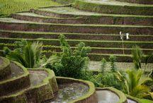 Bali - my love