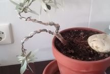 My Bonsai in Training / Pictures of my bonsai in training. I just started this as a hobby. Any comments or tips are welcome!