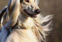 Dog Breeds of the World / Click the links to learn more about these amazing dog breeds!