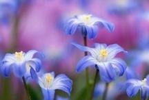 gardens / by Fidelis Power