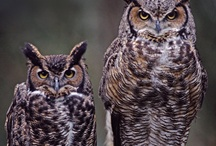 Owls  / by Cindy Young