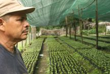 Grower Coops / Where Just Coffee comes from...