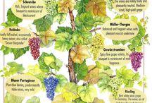 Germany wines