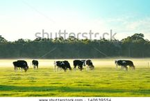 Çiftliğimizden Görüntüler