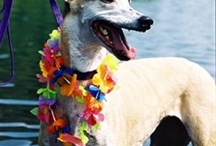 Greyhound Fashionistas