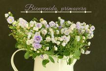 Flores / Viva la primavera