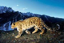 Animals / Mountain beings