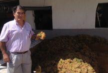 Visita de Toni Miller al Lagar de Bodegas Salado / Nuestro amigo y fan de Facebook Toni Miller se ha acercado a Bodegas Salado y ha visitado el Lagar en plena vendimia!! Gracias por la visita!