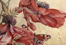 botanical painting and drawings