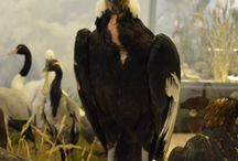 Our Birds / Photos of the birds, that can be found in the Natural History Museum of Meteora and Mushroom Museum