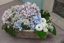 Bouquets d'hortensia