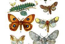 Mariposas, borboletas, butterflies