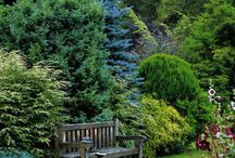 Privacy Plantings / by Alison Conliffe