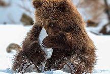 OG BEARS