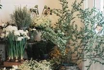 ДЕКОР помещения/ Decor and Plants / Декоративные элементы и растения в интерьере