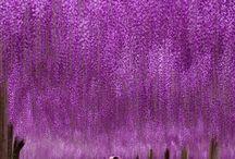 záplava květů