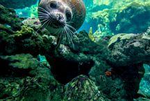 Marine Life :: Vida Marina
