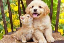Pet Lovers / Calling all Pet Lovers to share and love animals