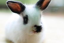 best bunnies