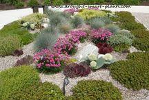 Drought Smart Gardens