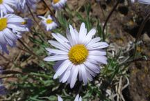 New Mexico - Flowers and Wildlife / Georges' photographs of flowers, insects, reptiles and animal tracks