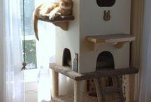 casa pisicii