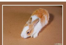 Rabbits- Tricks, Hacks, Tips / If you have a rabbits, here are some tricks you need to know.