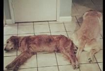 Hunde / Dogs not dawgs yo.