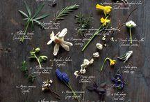 moodboard botanical