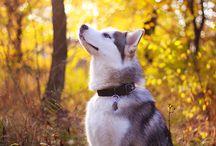 Doggie ~