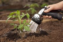 Green Thumb / Even if you don't have a green thumb..... get simple and helpful tips to make it look like you do.