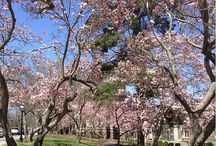 Springtime 2014 / Greetings from a campus in bloom!