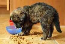 Dinnertime! / by The Daily Puppy