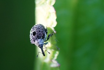 my bug photos