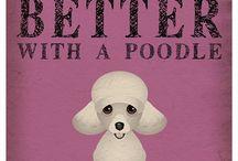 Poodles!! / by Ann Westphal