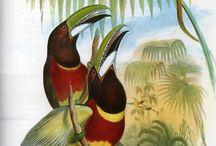 História Natural do Brasil